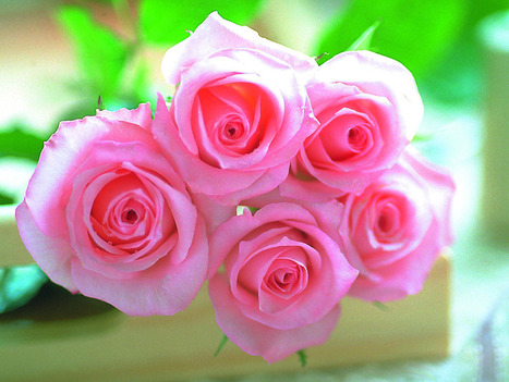 Lovely Rose Wallpaper HD - Desktop Wallpaper | Happy New Year Greetings | Bollywood Movies, Videos, Photos, Events | Scoop.it