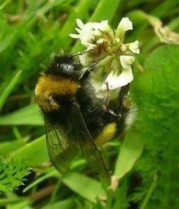 Actualité > Déclin des abeilles : les effets des pesticides peuvent s'additionner ! | Abeilles, intoxications et informations | Scoop.it