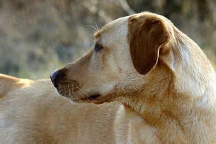 Are You Ready For a New Dog After the Loss of a Pet? | Animal Bliss | Animal Welfare | Scoop.it