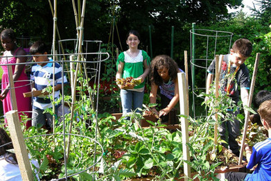 Cornell Extension's school garden project grows success | School Gardening Resources | Scoop.it