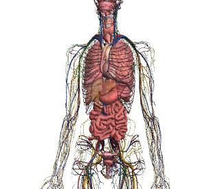 Zygote Body | ICT SO | Scoop.it