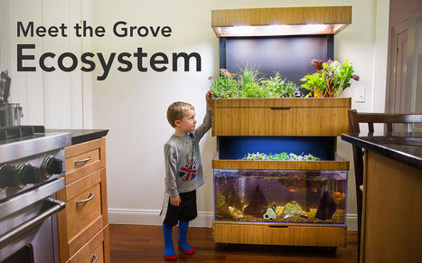 Grove grows your veggies indoors using LED lights and fish poop | Vertical Farm - Food Factory | Scoop.it