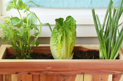 Here's How To Turn Your Vegetable Scraps Into Vegetables Again | Curiosités planétaires | Scoop.it