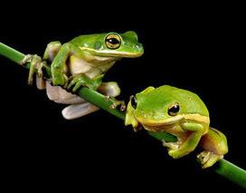 L'intelligence collective de la grenouille | Intelligence collective | Scoop.it