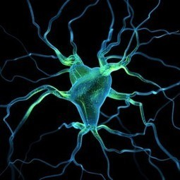 The Roles Neuroplasticity and EMDR Play in Healing from Childhood Trauma   Attachment & Trauma   Scoop.it