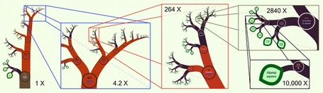 OneZoom: A Fractal Explorer for the Tree of Life | Complex Insight  - Understanding our world | Scoop.it