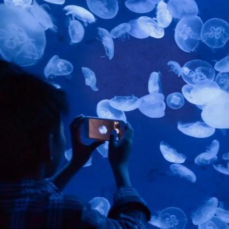 New Apple Ad Highlights iPhone 5 Camera   Macwidgets..some mac news clips   Scoop.it