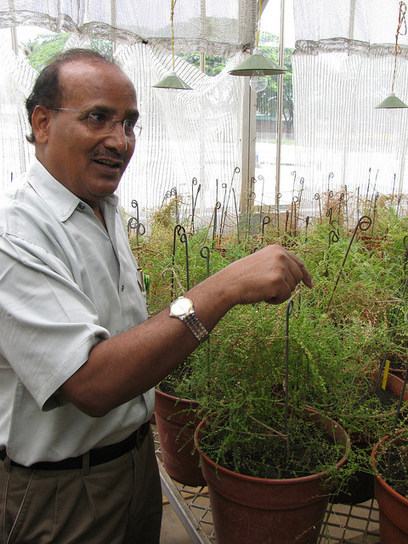 ICRISAT DG on the importance of genebanks | Agricultural Biodiversity | Scoop.it