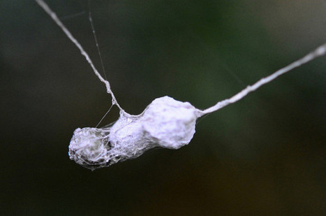 Boston startup with silk osteoarthritis treatment seeks up to $750K in seed round   silk & sericulture   Scoop.it