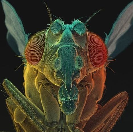 """The Incredible Photographs Of Micro Monsters. Part 1. 