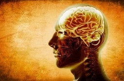 Stress, Brain Wiring, Empathy and Morality | Theory of Knowledge | Scoop.it