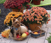 Bunny's Blog: Be Thankful for Pets – Celebrate Wisely | Pet News | Scoop.it