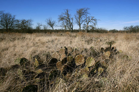Prairie park moves forward even as Fort Worth grows | Other voices | Fort Worth, Arlington, N... | Prairie and Grassland Ecosystems | Scoop.it