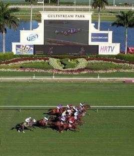 Under The Stronach Group's ownership, Gulfstream no longer content to go silent in the summer - MiamiHerald | Horse Racing News | Scoop.it