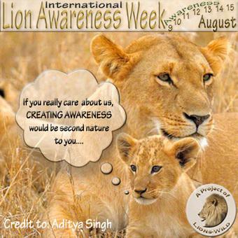 International Lion Breeding Awareness Day(12 August). | Corinne | Scoop.it