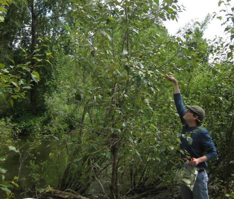 Bacteria in branches naturally fertilize trees   Erba Volant - Applied Plant Science   Scoop.it