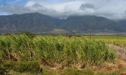 Hawaii's last sugar harvest paves the way for a fight over the land's future | sustainablity | Scoop.it