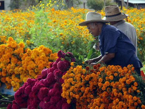 Prevén aumento en ventas por Día de Muertos | DIA DE MUERTOS | Scoop.it