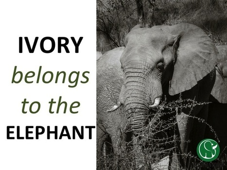 The Price of an Elephant | GarryRogers Biosphere News | Scoop.it