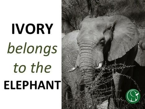The Price of an Elephant | GarryRogers Biosphere News | Scoop.it