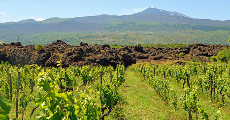 Etna Fumes and Spews, but the Winemaking Goes On | Vitabella Wine Daily Gossip | Scoop.it