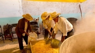 GM maize splits Mexico | MAIZE | Scoop.it