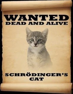 Schrodinger's Cat... | Intelligent humor | Scoop.it