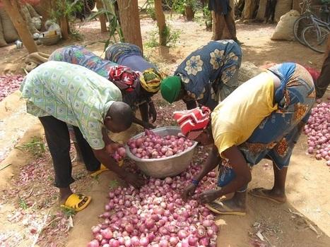 APIL, le soutien à l'agroécologie au Burkina Faso | Questions de développement ... | Scoop.it