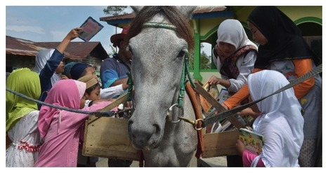 Horseback Library Serves Indonesia's Remote Readers and More Critical Linking | innovative libraries | Scoop.it