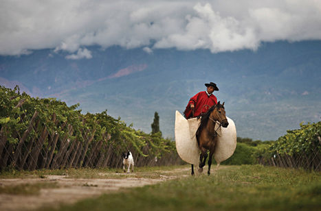 Argentine Malbec: Old dog, new tricks | Grande Passione | Scoop.it
