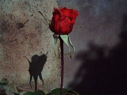 2014 Rose Day Images | Wallpapers | Valentines Day 2014 | ValentinesDay2014 | Scoop.it