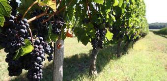 Investir dans les vins et vignobles | Le vin quotidien | Scoop.it