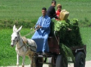 Rural Egyptians suffer most from increasing poverty | Égypt-actus | Scoop.it