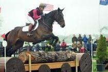 Vente aux enchères de chevaux de CCE en Irlande: un succès - Actualité équestre - Equivista, le site communautaire des passionnés du cheval   Cheval et sport   Scoop.it