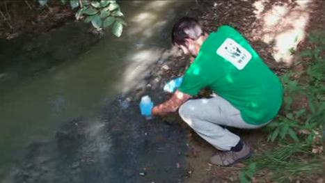 Doñana recibe las aguas residuales sin depurar de tres municipios de Huelva, según WWF / Vídeos / SINC - Servicio de Información y Noticias Científicas | Ecología sostenible | Scoop.it