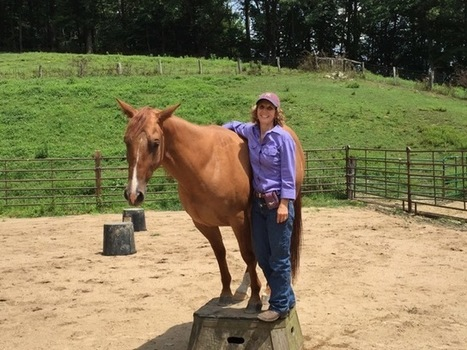 Natural Horsemanship Challenge – Road to the Summit Colts 2015   The Parelli Blog   The Natural Horse   Scoop.it