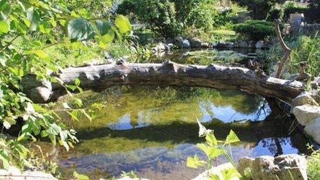 Et si les amphibiens avaient droit de cité à Grenoble! - France 3 Alpes   Biodiversité   Scoop.it