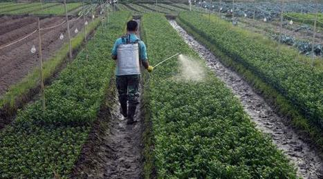 Les pesticides , le nouveau problème majeur de santé publique ? | Toxique, soyons vigilant ! | Scoop.it