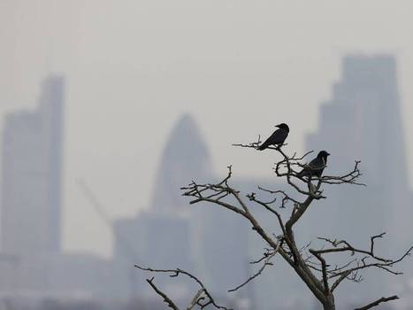 UK smog and air pollution: spike in 999 calls over breathing problems | Europe, Australia and Africa | Scoop.it