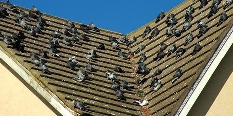 Pest Bird Control | Effective Ways to Scare and Get Rid of Birds | Scoop.it