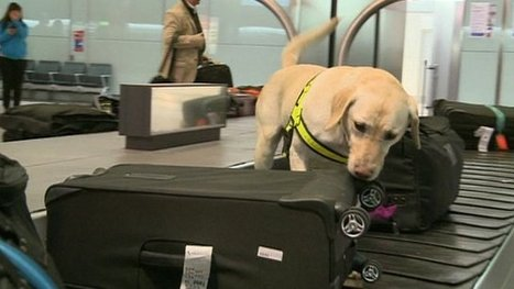 Dogs fighting wildlife crime at airport | Wildlife Trafficking: Who Does it? Allows it? | Scoop.it