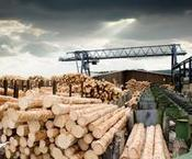 International trade in logs and timber worth $50 billion in 2013 | International Trade | Scoop.it