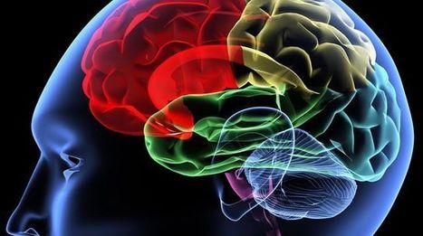 Les prodiges de votre cerveau | Cerveau intelligence | Scoop.it