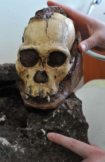 2 million-year-old Australopithecus sediba skeleton found in  South Africa | Amazing Science | Scoop.it