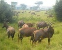 Wildlife Safaris - Monkey Tour Safaris   Uganda Travel Ideas   Scoop.it
