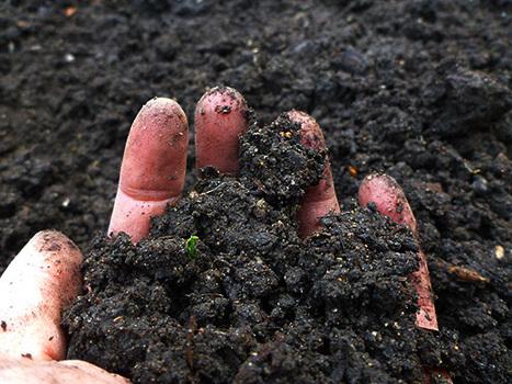 Getting Stoned on Soil | Grown Green Gardens | Scoop.it