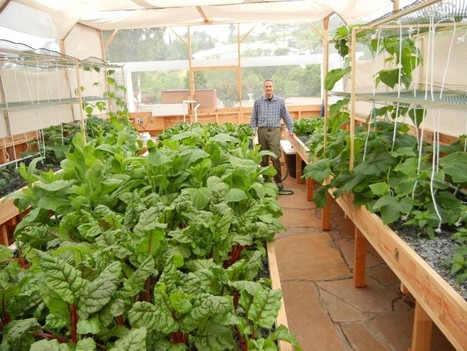 Before and After Photos – 40 Days Growth in a Portable Farm | Aquaponics World View | Scoop.it