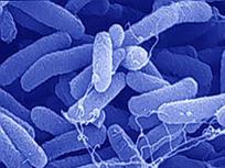 ¿Por qué son buenas las bacterias?   BIOLOGIA   Scoop.it