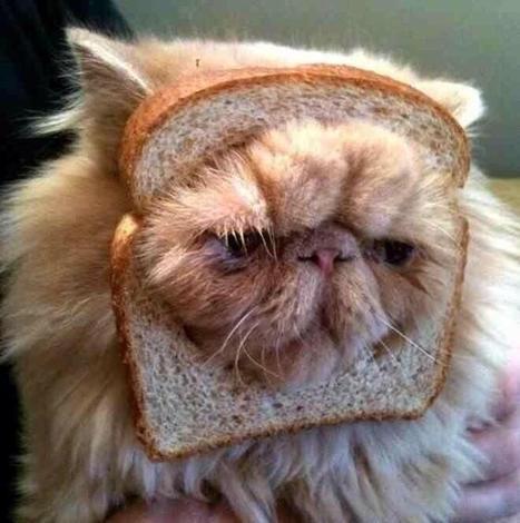 Inbred Kitty | Vloasis vlogging | Scoop.it