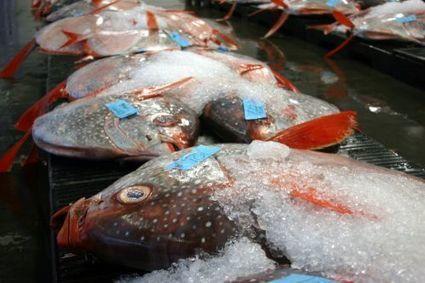 Océans : les poissons des profondeurs sont plus riches en mercure | Toxique, soyons vigilant ! | Scoop.it